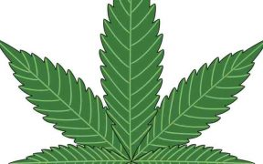 Medical Cannabis is Healing AutismMedical Cannabis is Healing Autism